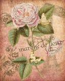 Collage botánico antiguo - elegancia lamentable - Rose rosada - matasellos y escritura franceses Epehmera - fondo Painterly ilustración del vector