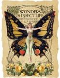 Collage botanico antico - Art Nouveau Butterfly Illustration - acquerello - partitura d'annata - fondo di carta afflitto illustrazione di stock