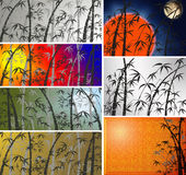 Collage - branches of a bamboo. Royalty Free Stock Photography