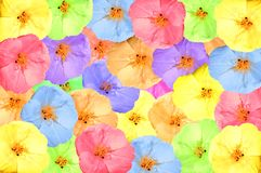 Collage of bright spring flowers Royalty Free Stock Images