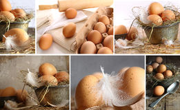 Collage of brown eggs images Stock Images