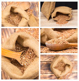 Collage of buckwheat Stock Photos