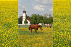 Collage of buttercup meadow with grazing ponies Royalty Free Stock Images