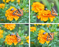 A collage of butterflies royalty free stock images