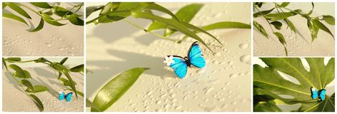 Collage with butterfly and palm leaf Royalty Free Stock Photo