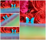 Collage with butterfly and roses Stock Photos