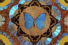 Collage of butterfly wings Stock Images