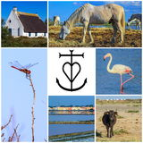 Collage of Camargue photos, France Stock Photos