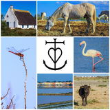 Collage of Camargue photos, France Stock Image