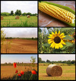 Collage of campaign. Collage landscapes of the countryside Royalty Free Stock Images