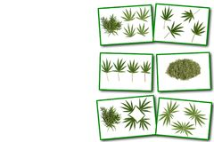 Collage on white background cannabis plant royalty free illustration