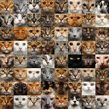 Collage of 64 Cat Faces Royalty Free Stock Images