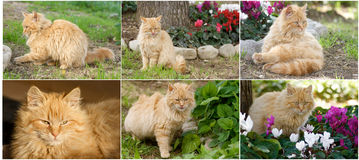 Collage cats royalty free stock image