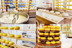 Collage with cheese manufacturing process. Food background Royalty Free Stock Photo