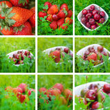Collage of cherries and strawberry Royalty Free Stock Photography
