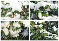 A collage of Christmas pictures. Beautiful winter background stock image