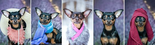 Collage, cinque foto del cane nelle immagini differenti Cane in a a Fotografie Stock