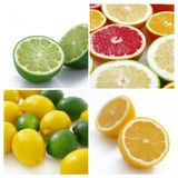 Collage of citrus Royalty Free Stock Photos