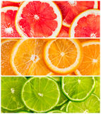 Collage of citrus-fruit. Background with citrus-fruit of lime, grapefruit and orange slices Royalty Free Stock Images