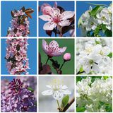 Spring. Collage with close up of  blossoming trees and bushes Stock Images