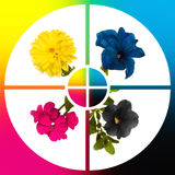 Collage CMYK flowers. Conceptual image-grid of flowers colour CMYK stock illustration