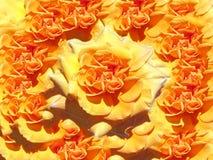 Collage color de rosa amarillo imagen de archivo
