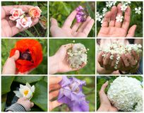 Collage of colored spring flowers in hand of a young girl on the white background stock photo