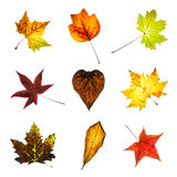 Collage of colorful autumn leaves Stock Photography