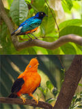 Collage of colorful blue and orange birds. Stock Image