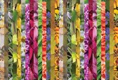 Collage colorido de tiras verticales, horizontal Imagen de archivo