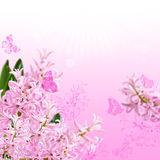The collage of colors pink hyacinth and butterflies Royalty Free Stock Photos