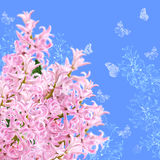 The collage of colors pink hyacinth and butterflies Stock Photos