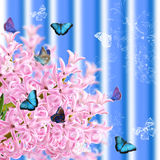 The collage of colors pink hyacinth and butterflies Stock Image