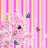The collage of colors pink hyacinth and butterflies Royalty Free Stock Photo