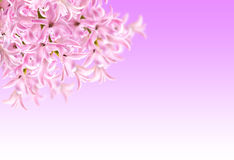 Collage of colors pink hyacinth Stock Photo
