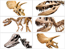 Collage composition of dinosaurs skeletons on white isolated background. Stock Image