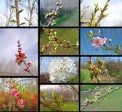 Collage con gli alberi da frutto fotografia stock