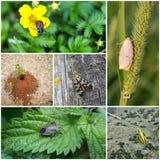 Collage con gli insetti Immagine Stock