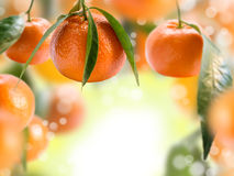 Collage con i mandarini. Fotografie Stock Libere da Diritti