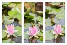 Collage con il bello fiore di loto della ninfea della viola bianca Fotografia Stock