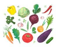 Collage con l'illustrazione delle verdure Fotografia Stock