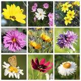 Collage con las flores hermosas Imagen de archivo