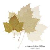 Collage con las hojas planas Imagen de archivo libre de regalías