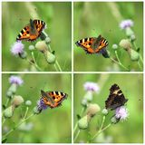 Collage con las mariposas Imagen de archivo libre de regalías