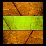 Collage con tres hojas del mapple Foto de archivo libre de regalías