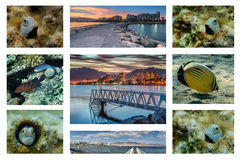 Collage of coral fish of the Red sea Stock Image