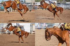 Cowboy Riding Bucking Bronco Collage. Collage of a cowboy riding a bucking horse in the saddle bronc event at a country rodeo royalty free stock photos