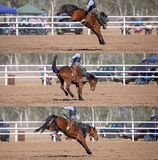 Cowboy Riding Bucking Bronco Collage. Collage of a cowboy riding a bucking horse in the saddle bronc event at a country rodeo stock images