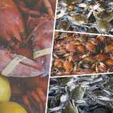 Collage of Crabs. On the markrt Royalty Free Stock Photo