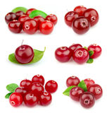 Collage from cranberry Royalty Free Stock Image